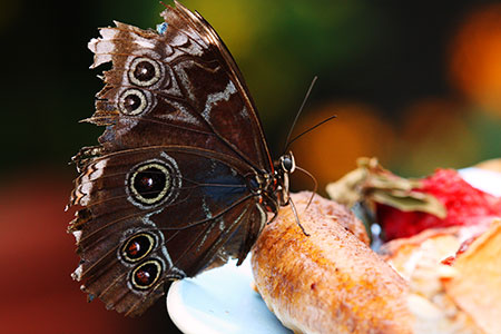 Butterfly perched on a banana