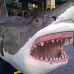 Great White Shark Model